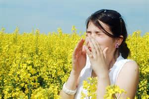 Seasonal Allergies and the Immune System