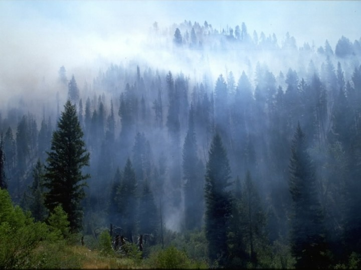 Respiratory Wellness during Fire Season