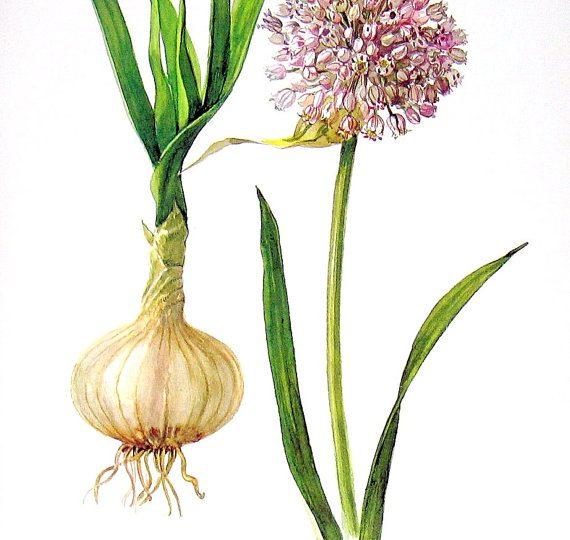 Ode To Garlic
